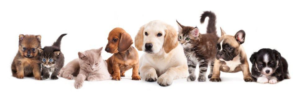 Trucuri pentru curățarea unei locuințe unde există animale de companie